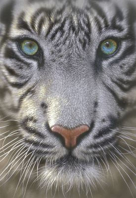 """Картонен пъзел """"Бял тигър"""" - 500 части"""