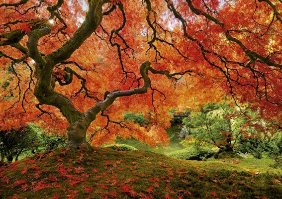 """Картонен пъзел """"Японска градина"""" - 1500 части"""